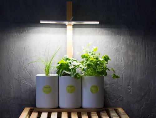 test lilo potager d'intérieur connecté prêt à pousser