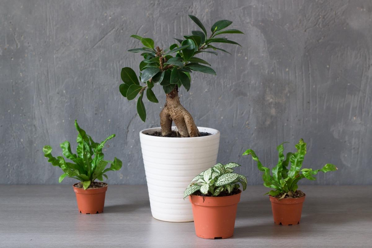 diy un terrarium humide pour la maison rhapsody in green. Black Bedroom Furniture Sets. Home Design Ideas