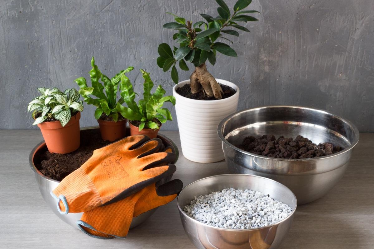 diy : apprendre à créer son propre terrarium humide facilement