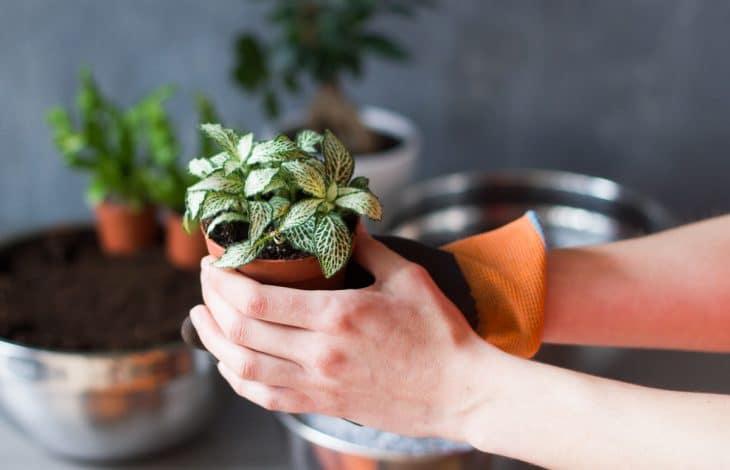 DIY : Un terrarium humide pour la maison