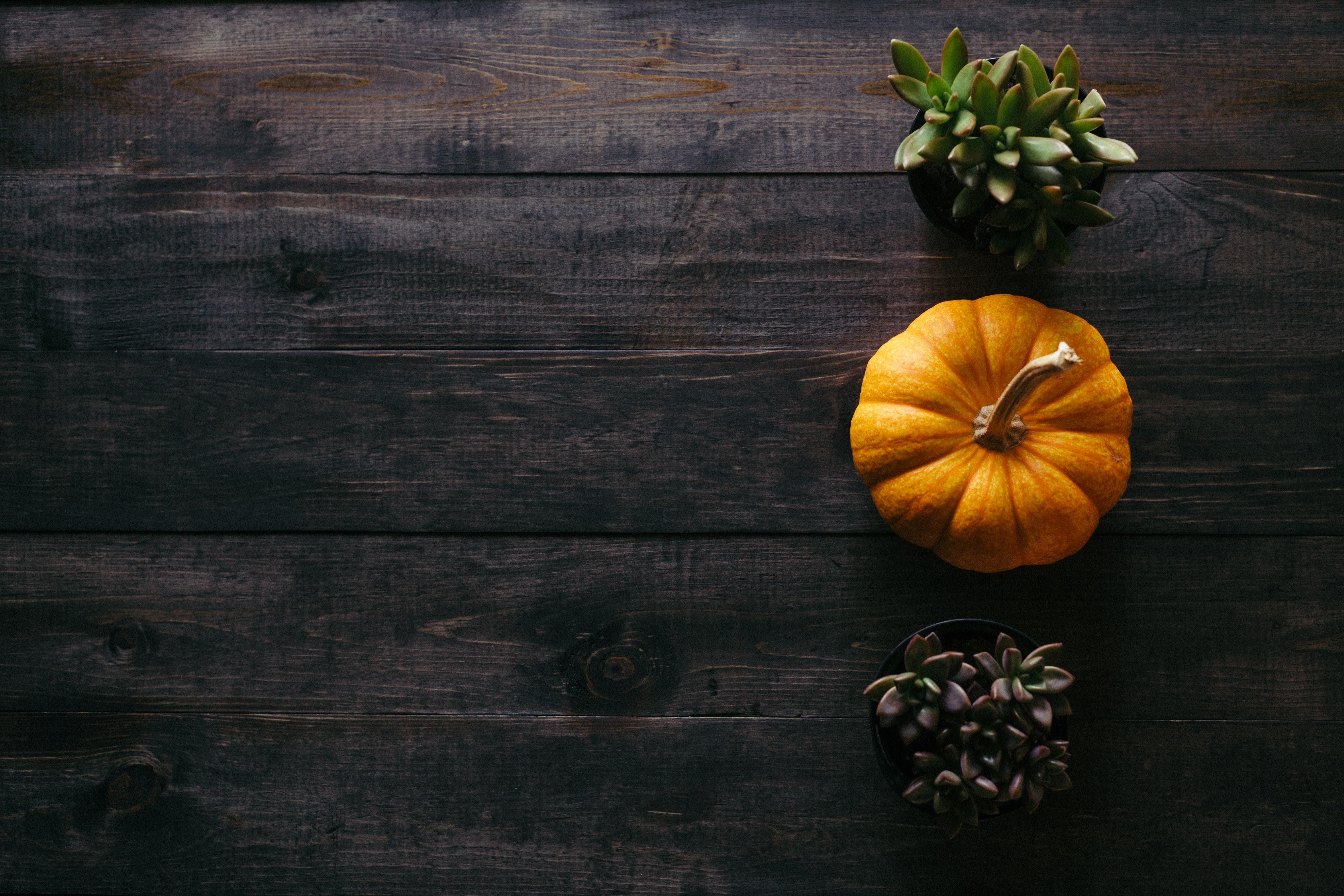sélection culturelle halloween